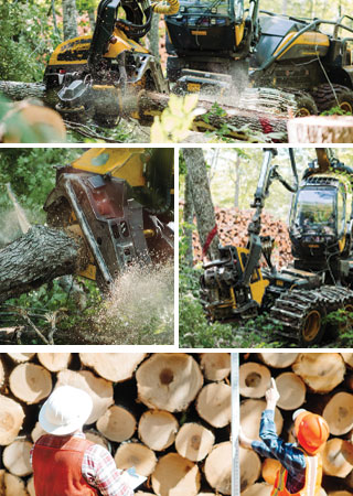 forest harvesting montage
