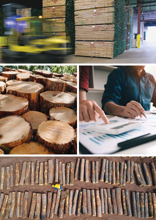montage of commercial forestry images