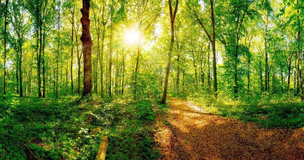 U.P. hardwood forest